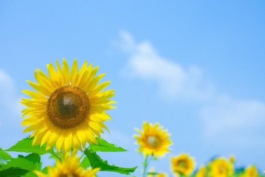 紫外線吸着剤・界面活性剤不使用 オーガニックノンケミカル日焼け止めランキング 2014